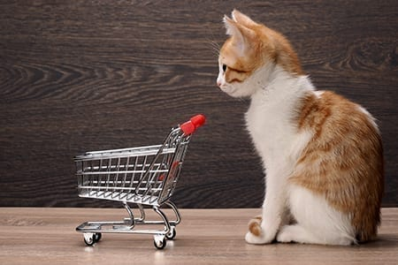 Grocery supermarket trolley and kitten. Concept - pet products,